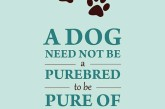 #Dubai has it's share of most beautiful #purebreds. But our hearts belong to #dogs of all and any kind, #pedigree or not.🐕🐶🐩