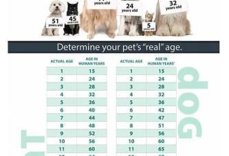 What's the real age of your pet?